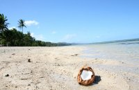 Plaża, muszla