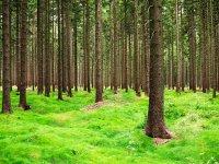 lasy w Górach Izerskich